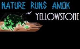 nature runs amok at yellowstone